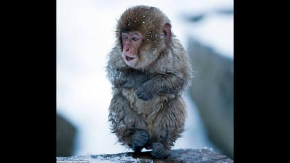 monkeycold